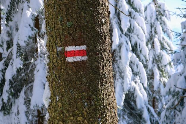 Pins avec des marques de direction rouges pour les randonneurs recouverts de neige fraîche tombée dans la forêt de montagne d'hiver par temps froid et lumineux.
