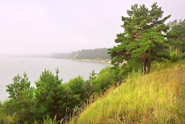Pins sur la rive de la baie berdsky un matin brumeux au-dessus de la surface de l'eau en été