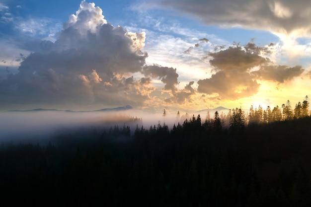 Pins vert foncé dans une forêt d'épinettes de mauvaise humeur avec des rayons de lumière du lever du soleil qui brillent à travers les branches