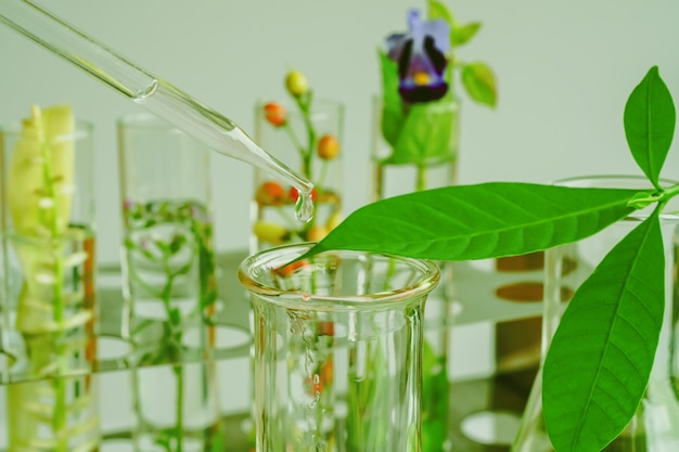 Pipette tombant au-dessus du tube à essai d'un échantillon de produit chimique dans des plantes médicinales