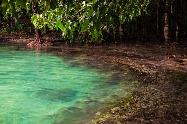Piscine d'émeraude à krabi, thaïlande