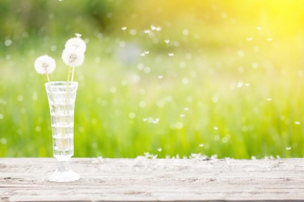 Pissenlit blanc dans un vase sur une table en bois, à l'extérieur