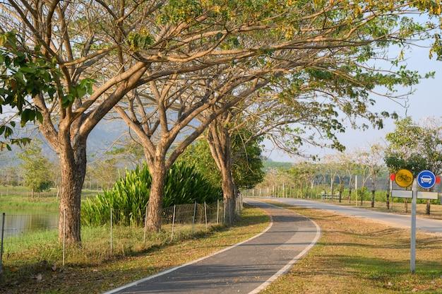 Piste cyclable et route avec rangée d'arbres