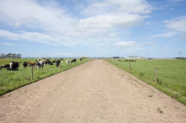 Piste de ferme laitière dans l'île du sud de la nouvelle-zélande