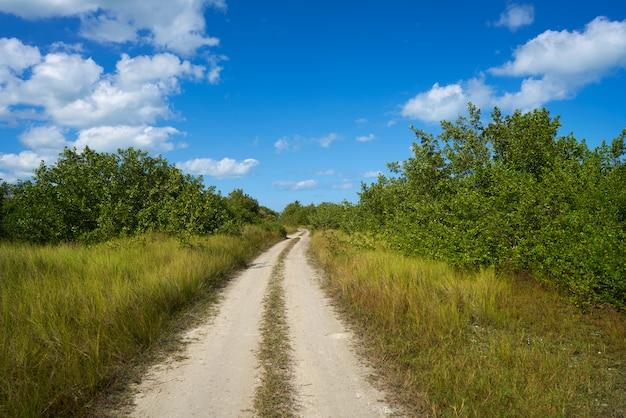 Piste des mangroves de l'île holbox au mexique
