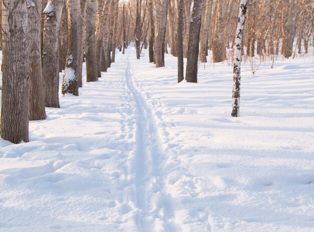 Piste de ski sur la neige en hiver park pour le sport