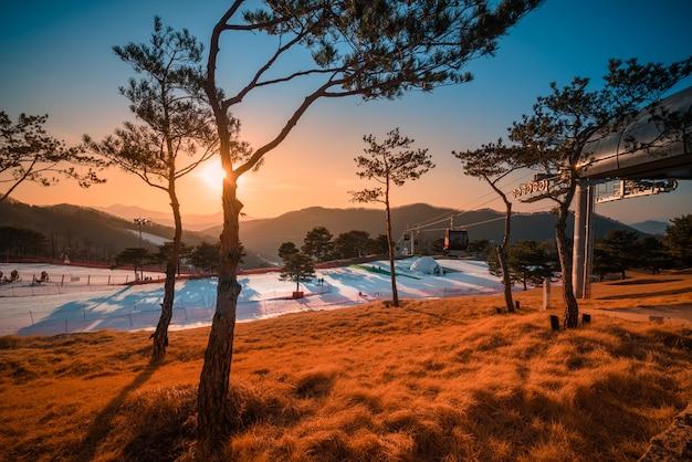 Pistes de ski avec arbre au coucher du soleil en corée du sud.