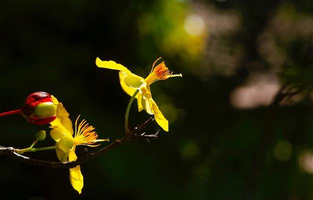 Pistil de fleur d'oranger avec arrière-plan flou