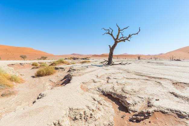 Le pittoresque sossusvlei et deadvlei, argile et casserole de sel avec acacias tressés