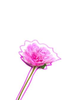 Pivoine en fleurs sur fond blanc entourée de marqueur
