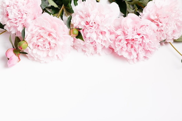 Pivoine rose blanche délicate avec des pétales de fleurs sur fond blanc. vue de dessus aérienne, mise à plat. espace de copie. anniversaire, mère, saint-valentin, femme, concept de jour de mariage.
