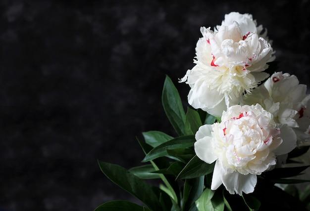 Pivoines blanches fleurissent sur fond noir