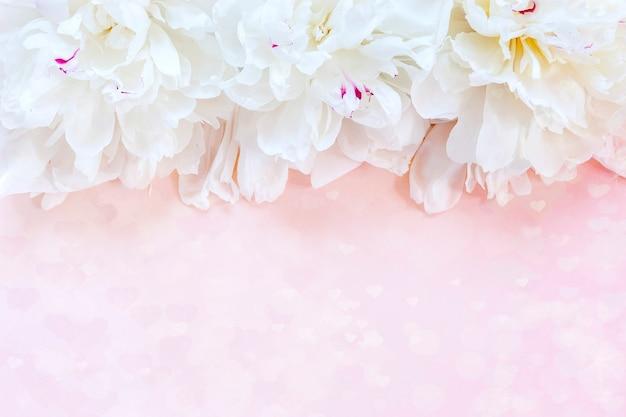 Pivoines blanches sur fond rose. concept pour la saint-valentin, mariage, fiançailles