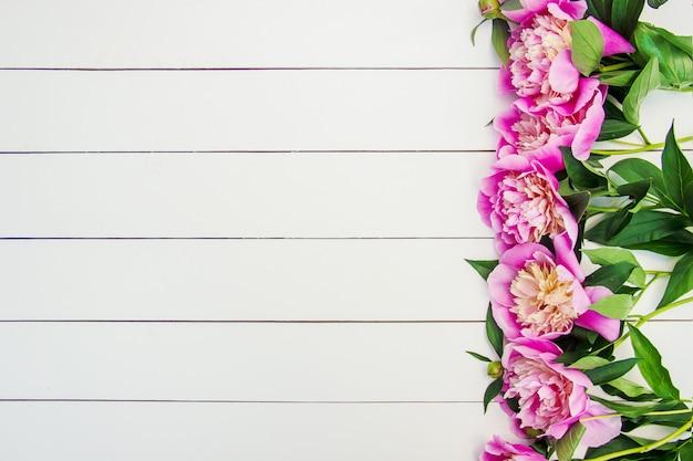Pivoines de fleurs sur fond blanc. mise au point sélective.