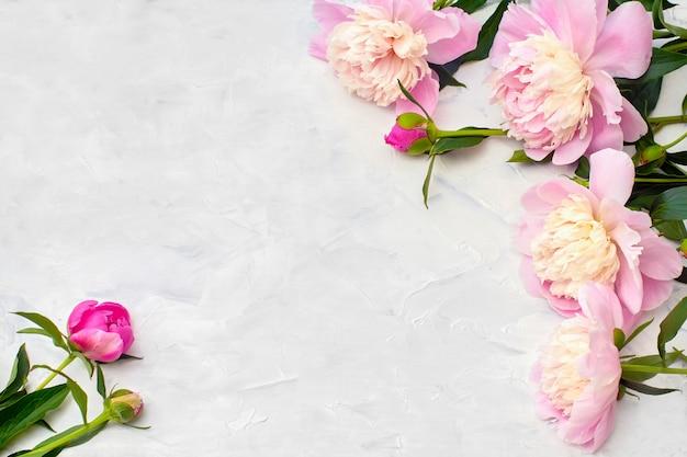 Pivoines roses sur fond blanc.