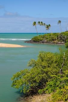 Plage brésilienne et angrove à barra de camaratuba beach près de joao pessoa paraiba brésil