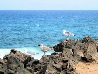 Plage, dans les îles canaries la nature