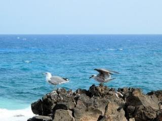 Plage, dans la mer des îles canaries