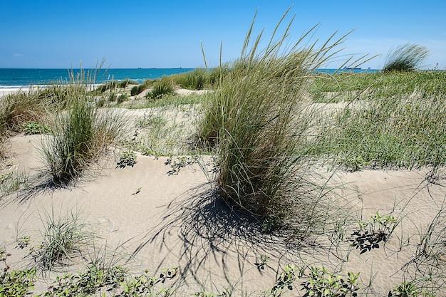 Plage de dunes de sable du lido de venise