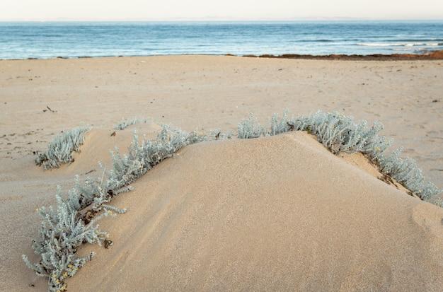 Plage avec des dunes de sable et de l'herbe marram à la lumière du coucher du soleil