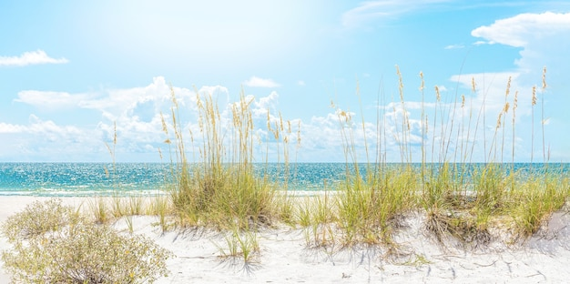 Plage ensoleillée avec herbe de dunes de sable et ciel bleu