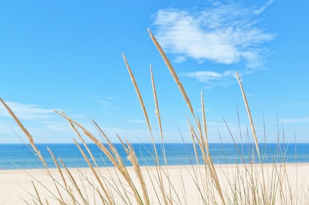 Sur la plage d'été, une sorte d'herbe sur un mur de ciel et de mer.