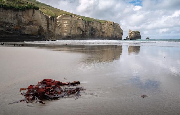 Plage humide avec de l'herbe de mer en premier plan et des falaises de grès en arrière-plan plage tunnel nouvelle-zélande