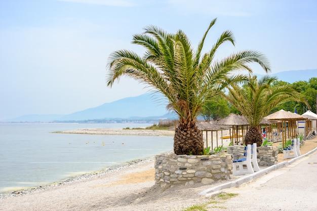 Plage de la mer avec des palmiers