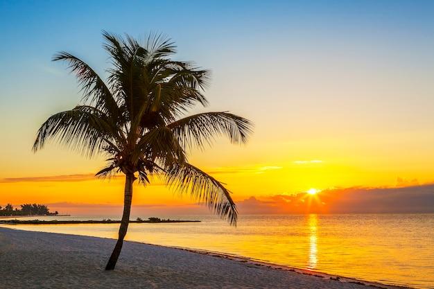 Plage avec palmier au coucher du soleil, key west, usa