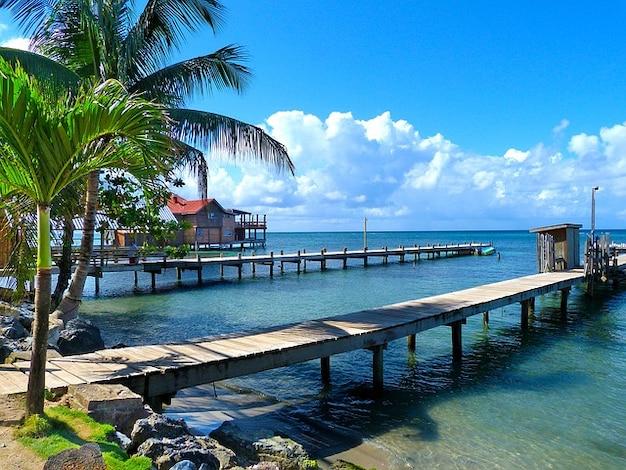 Plage roantan mer honduras paume d'île