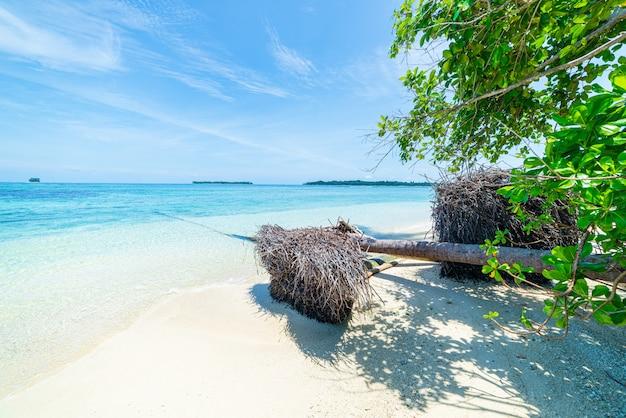 Plage de sable blanc avec cocotiers, récifs coralliens d'eau bleu turquoise, plage déserte sans peuple