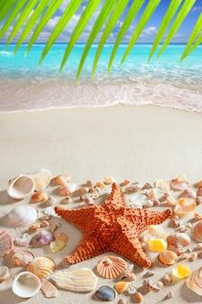 Plage sable étoile de mer des caraïbes mer tropicale