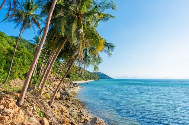 Plage de sable d'une île tropicale déserte paradisiaque. palmiers surplombent sur la plage. sable blanc. l'eau bleue de l'océan. reposez-vous loin des gens
