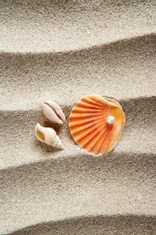 Plage sable perle coquille coquille coquille vacances d'été