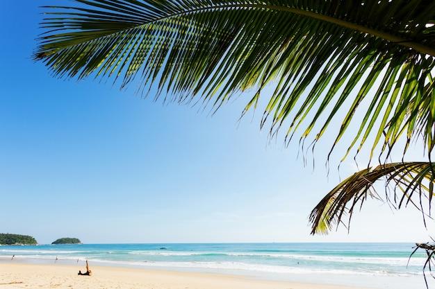Plage de sable tropicale avec cadre en cocotier belle plage