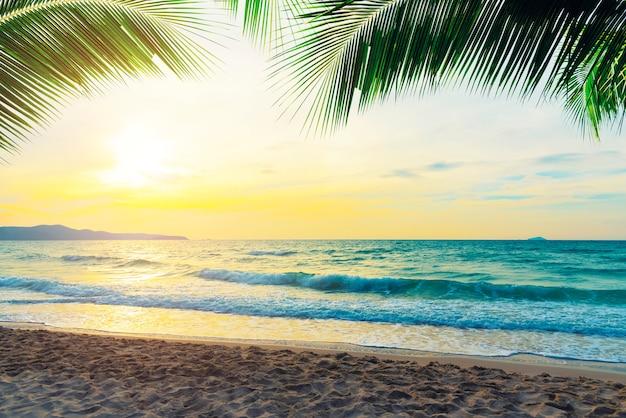Plage tropicale au coucher du soleil avec des branches de noix de coco dans le ciel.