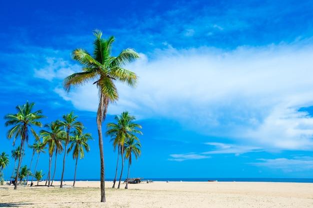 Plage tropicale au sri lanka avec palmiers
