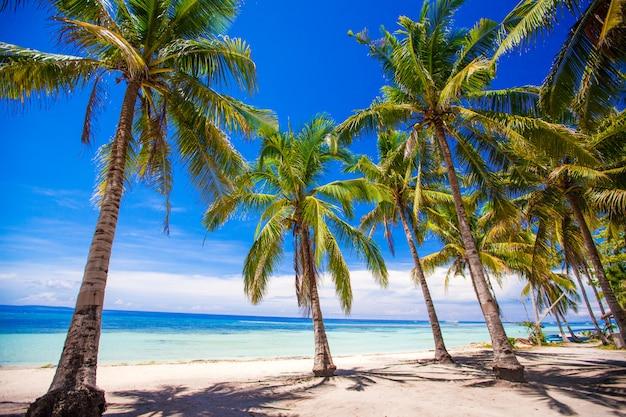 Plage tropicale avec de beaux palmiers et du sable blanc, philippines