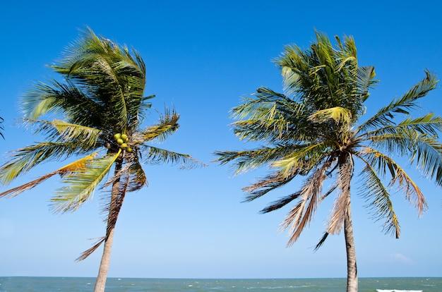 Plage tropicale avec cocotier avec un ciel bleu