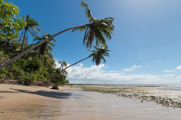 Plage tropicale avec des cocotiers en pente sur l'île de boipeba bahia brésil.