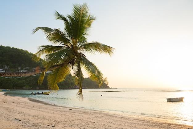 Plage tropicale à l'île de mahé aux seychelles. fuites de soleil sur la pulme et soleil éclatant sur le côté droit