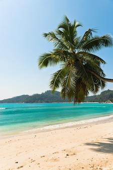 Plage tropicale à l'île de mahé seychelles. prise de vue verticale