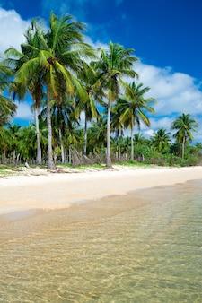 Plage tropicale intacte au sri lanka
