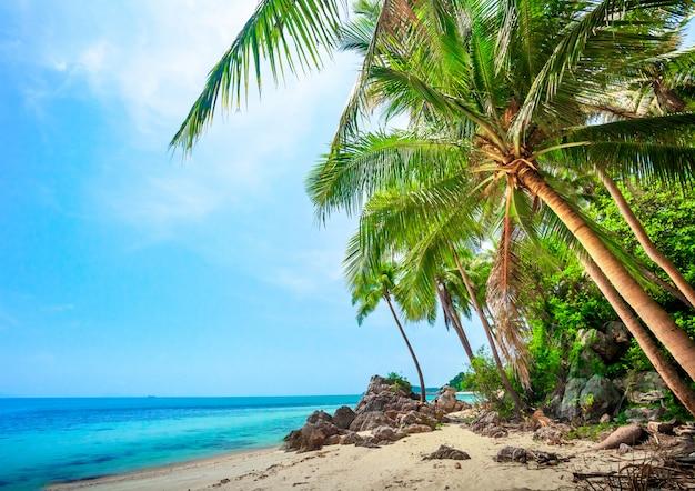 Plage tropicale avec des palmiers de noix de coco