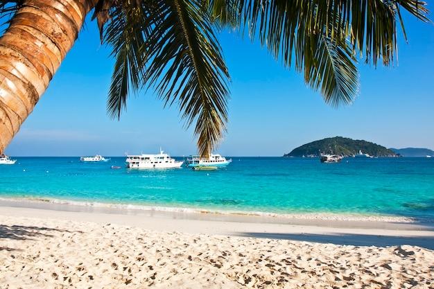 Plage tropicale de sable blanc avec palmiers.