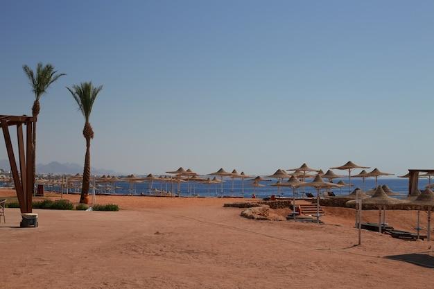 Plage de villégiature ensoleillée avec palmier sur la côte de la mer rouge