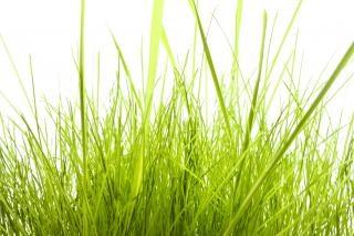 Plaine d'herbe