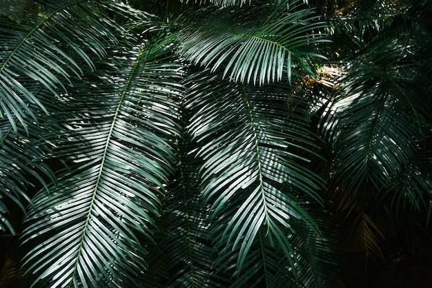 Plam laisse un motif vert naturel sur dark