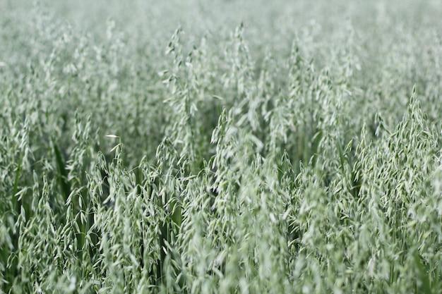 Plan large de plantes vertes dans un champ
