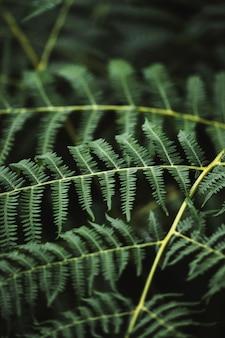 Plan macro sur une branche de fougère